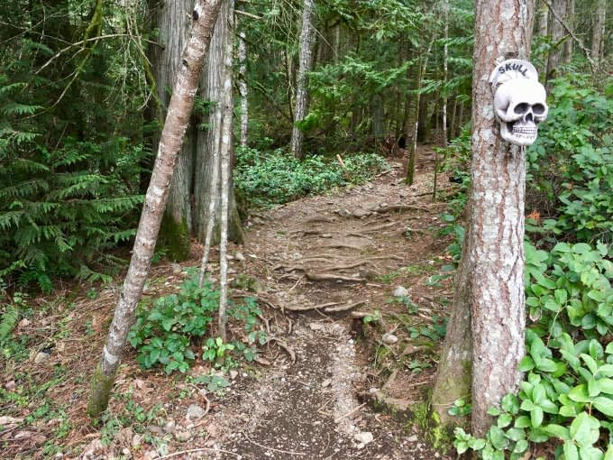 Skull Trail at Hartland mountain biking area